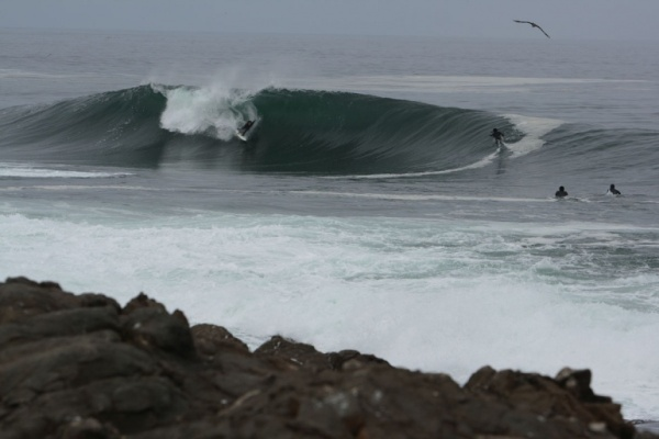 surf arica